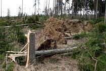 Průsek široký jako dálnice zanechala po sobě vichřice Emma v lese u osady Lipina poblíž Štáblovic.