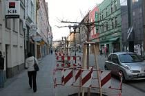 Tyto nové deštníkovité platany zdobí nyní celou Ostrožnou ulici.