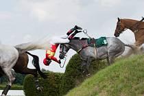 Roman Vondrouš získal ocenění v mezinárodní fotožurnalistické soutěži s názvem Pictures of the Year International. Druhé místo v kategorii Sport Action mu zajistil snímek Irská lavice. Na něm zachytil pád žokeje Dušana Andrése z koně.