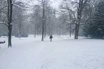 Na výzvu redakce zasílali včera čtenáři fotografie sněhové nadílky. Tento snímek vznikl v Městských sadech.