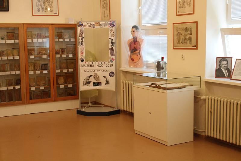 Muzeum patologie ve Slezské nemocnici v Opavě.