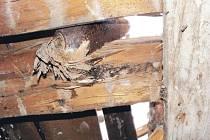 Dělostřelecká mina byla zaklíněna v trámech střechy rodinného domu v Dobroslavicích.