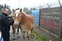 Opavští strážníci chytali užovku i dva koně.