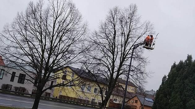 Technické služby Hlučín ořezávají jmelí na stromech s minimálním napadením.
