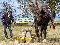 Celoroční seriál soutěží a kvalifikací pro chladnokrevné koně skončil o víkendu v Klokočově mistrovstvím republiky.