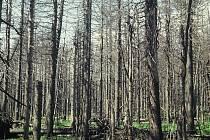 Takhle vypadá naprosto zdecimovaný smrkový les po napadení kůrovcem.