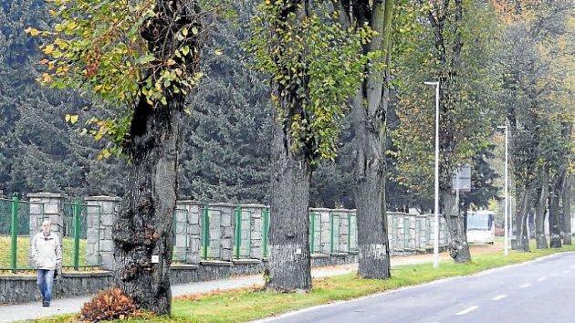 Jesenická ulice v centru Vrbna pod Pradědem projde zásadní změnou. K zemi zde půjde celkem dvacet osm vzrostlých stromů.