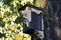 Sršní hnízda letos vznikala v budkách připevněných na stromech kolem naučné stezky na Cvilíně.