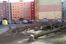 Krnovské sídliště minulý týden přišlo o 40 stromů a o 200 metrů čtverečních keřových skupin.
