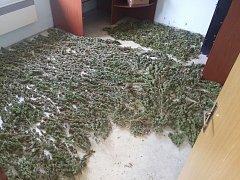 Policisté na Albrechticku zatkli cizince, kteří si koupili dům pro pěstování konopí.
