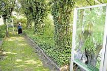 Stromy mohou být exponátem i výstavních síní. Kdo tomu nevěří, může se vydat do krnovské Flemmichovy vily.