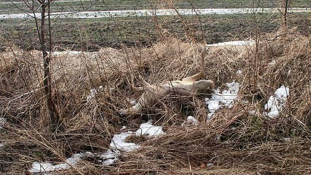 BĚHEM uplynulého víkendu zahynuly na cestách v okrese Bruntál dvě srny pod koly aut. Řidiči nemohli srážce zabránit.