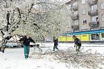 Rozkvetlé sakury na krnovském náměstí Hrdinů se rozlomily pod tíhou mokrého sněhu.