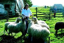 Manželé Křenovští, kteří jsou zakladateli občanského sdružení Stránské, chovají pravé valašské ovce. Jelikož se dnes ovčí vlna od malých dodavatelů nevykupuje, naučili se ji zpracovávat. Své zkušenosti a znalosti předávají dalším zájemcům.