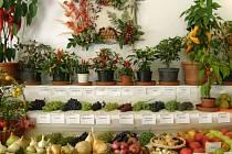 Výherní expozice. To bylo ale barev, tvarů a vůní. Dominovaly Jánošíkovy papričky, aranžmá Machů a Přasličákovo ovoce.