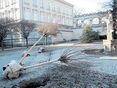 Výsadba za Švédskou zdí završila rozsáhlou rekonstrukci Smetanových sadů v centru Krnova.