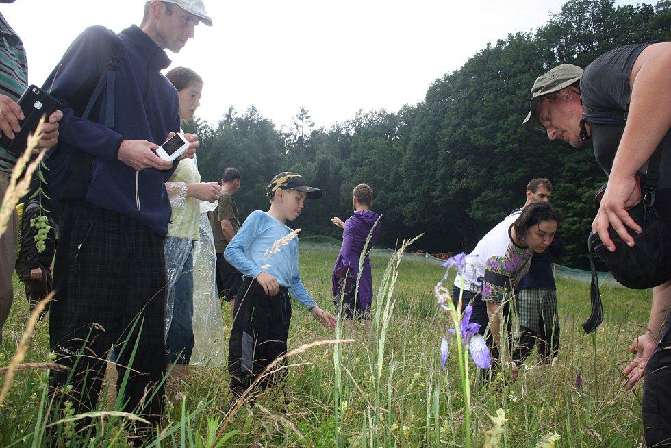Kokrhel jako částečný parazit  potlačuje růst trávy, ale  kvetoucím rostlinám neškodí.  Zástupci olomoucké univerzity na loukách kolem Krnova testují, jak toho využít při ochraně vzácných druhů rostlin.