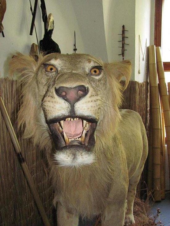 Hlavním lákadlem nové sezony na zámku v Linhartovech bude africké safari.