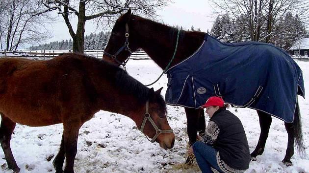 Velmi vzácnou chorobou, Cushingovým syndromem trpí kůň Lux, o nějž pečují manželé Křenkovi z Občanského sdružení Stránské u Rýmařova.