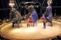 Indické slonice Maia, Deli a Laika z Cirkusu Humberto ohromí nejen svým vzhledem, ale i výkony. Za jejich drezúrou stojí manželé Armando a Ramona Renz.