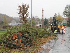 Vykácené stromy okolo silnice z Bruntálu do Meziny musely ustoupit rozšíření silnice, avšak kýžené cyklostezky se lidé nedočkají.