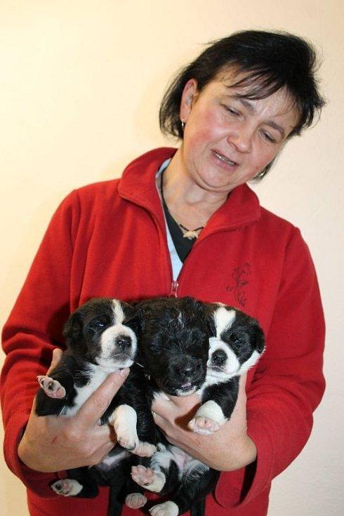 O roztomilou trojici pejsků se pečlivě stará v bruntálské veterinární ordinaci Aleše Jurovice ošetřovatelka Iveta Valášková.