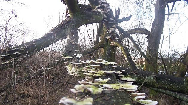 Úvalenské louky mají svůj půvab v každém ročním období.