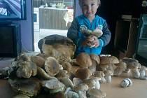 Houby rostou, jen je třeba vědět, kde. Vašík Chudoba to ví, a to jsou mu teprve tři roky a na houbách byl minulý týden s rodiči poprvé. A hned takový úlovek.