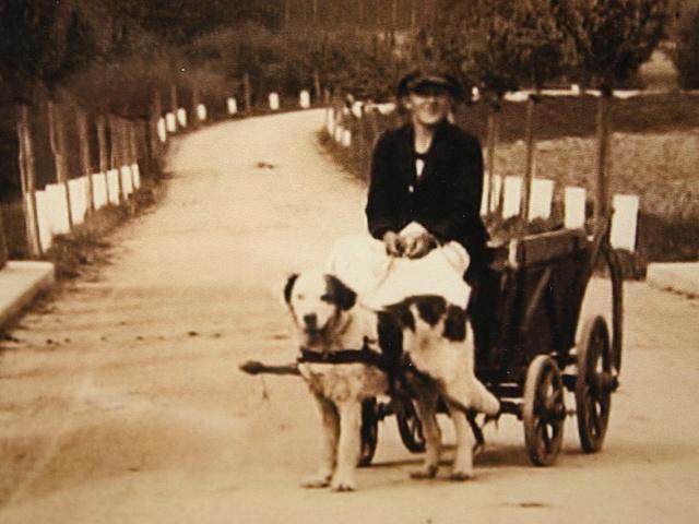První psí potah se podařilo najít na zvětšenině mostu v Branticích.