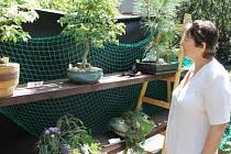 Kdo nestihl čtvrteční zahájení výstavy skalniček a bonsají v kulturním středisku v Bruntále, má šanci všechnu tu krásu uzřít na stejném místě ještě dnes a o víkendu v Krnově.