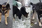 Utíkající psí duo z Krnovska je hvězdami sociálních sítí. Znají je i v Polsku.