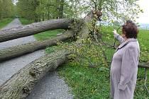 Vichřice natropila obrovské škody rovněž v lipové aleji na Uhlířském vrchu v Bruntále, kde zlámala několik statných kmenů. Zatarasené byly i stezky v městském parku.