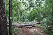 Stezky jsou přehrazeny stromy.