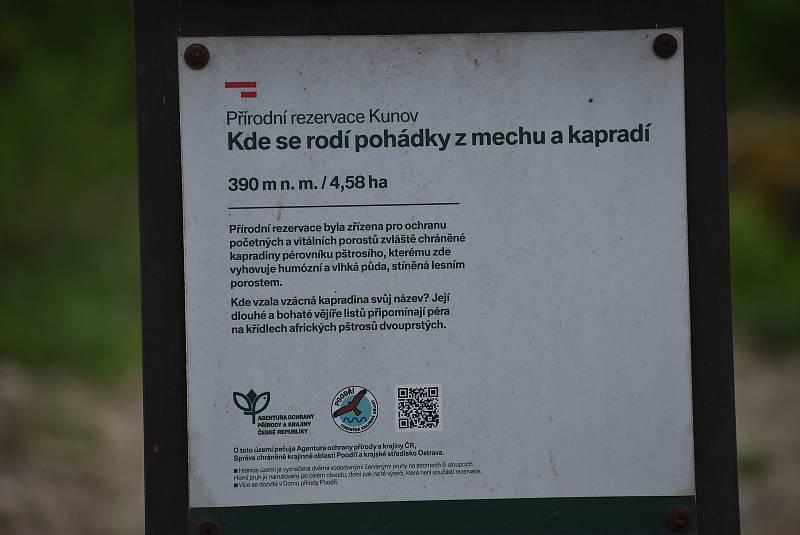 Pérovník pštrosí roste v rezervaci v Kunově díky mlýnskému náhonu, který zde zajišťuje stabilní vlhkost.