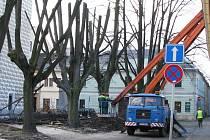 Bezpečnostní a ozdravný ořez prodlouží životnost lip v aleji u kostela na Žižkově náměstí v Bruntále o několik let.