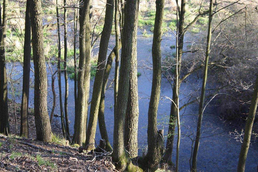 Ideální doba pro návštěvu bobří kaskády v řece Lužná je na jaře, když výhled nezakrývá vegetace ani listí stromů.
