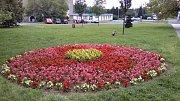 V předchozích letech zde probíhal pokus o dekorativní květinovou louku z 13 druhů letniček i konzervativní zahradnické kompozice.