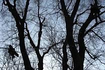 Stromolezci dokážou ošetřit dřeviny efektivně, odborně a bez toho, aby strom či jeho kmen a větve jakkoliv zbytečně poškodili.