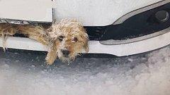 Řidič u Staré Vsi ucítil náraz a předpokládal, že zavadil o kus ledu. Když po pěti kilometrech zastavil, aby zkontroloval co se stalo, nestačil se divit. Z nárazníku na něj koukal k smrti vyděšený pejsek.