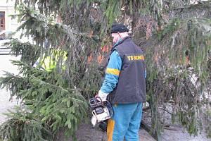 Vánoční strom instalovali na náměstí Míru pracovníci bruntálských technických služeb ve středu před polednem. Strom pochází z městských lesů.