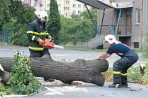Petrovickou ulici v Krnově v sobotu kolem 13 hodin zatarasila mohutná větev staré lípy.