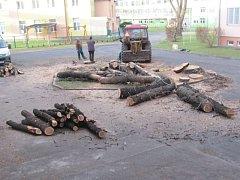 Rozsáhlé kácení stromů proběhlo v krnovské i v albrechtické nemocnici.