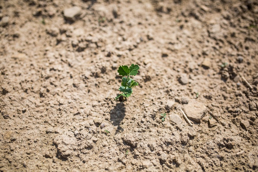 Po řadě suchých let to vzhledem k deštivému počasí z minulých týdnů vypadá, že letos bude vody dost. Odborníci ale varují, že jde o pouhé zdání.