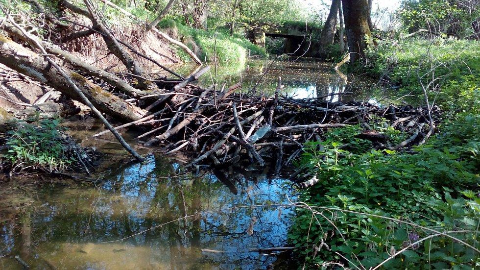 U mostu mezi Slezskými Rudolticemi a Kobernem bylo před rokem prvních pár větví. Dnes už tu stojí nová dokončená hráz. Řeka Lužná je o metr hlubší a široká trojnásobně.