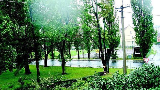 Vyvrácený javor.  Strom s mohutnou korunou se vyvrátil v úterý odpoledne na Janáčkově náměstí v Krnově. Javor naštěstí spadl rovnoběžně se silnicí, takže neponičil okolní domy ani nikoho nezranil.