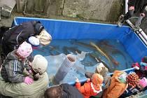 Sváteční den 28. října strávily davy návštěvníků při výlovu rybníka Výtažník.