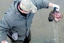 Zbytky zvířat v potoce Prudnik našel náhodný kolemjdoucí. Protože jde o lovnou zvěř, podezření padlo na pytláky a na myslivce.