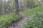 Lesní pěšina ke kapličce je nepřehlédnutelná.
