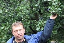 Sadař Bohumil Lux je překvapen výjimečně bohatou úrodou ovoce na stromech v Sosnové.
