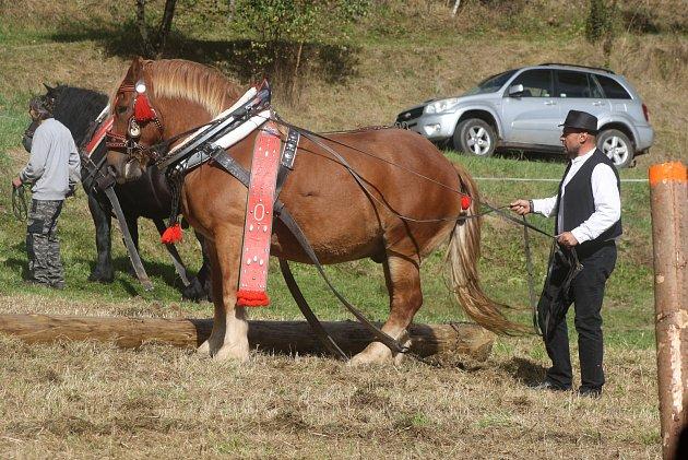 Svod tažných koní vHolčovicích Spáleném letos představil 14chladnokrevných krasavců.